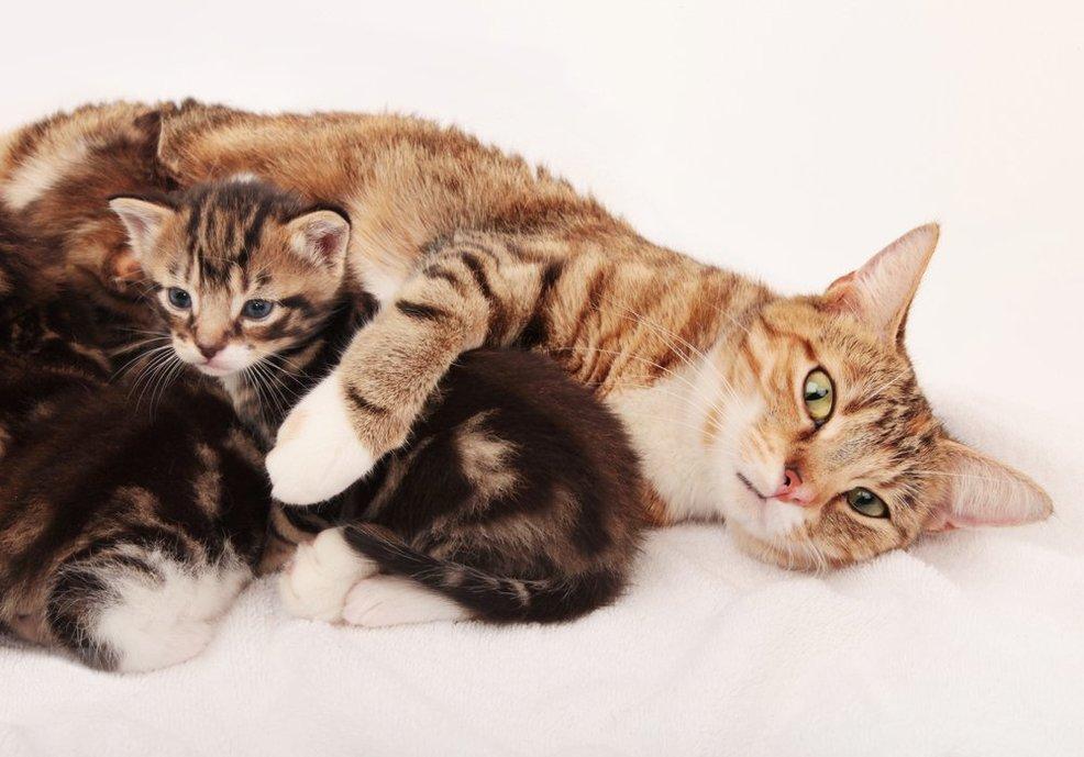 Картинка забота животных о своем потомстве