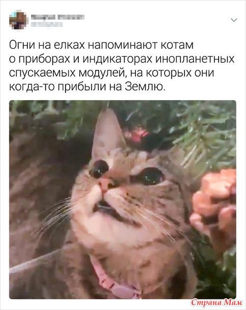 Новогодняя миссия выполнима))