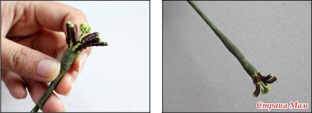 Быстрый Цветочный Марафон. 3 этап Тюльпан