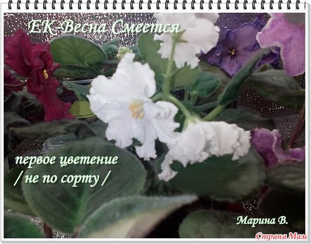 Цветем и радуем