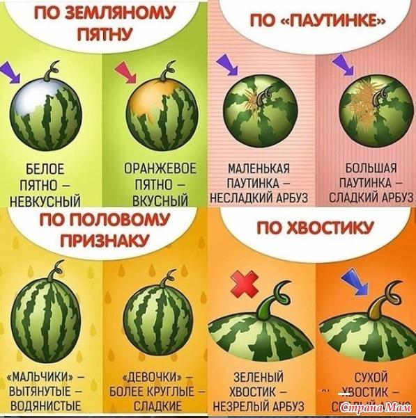 Как выбрать арбуз.