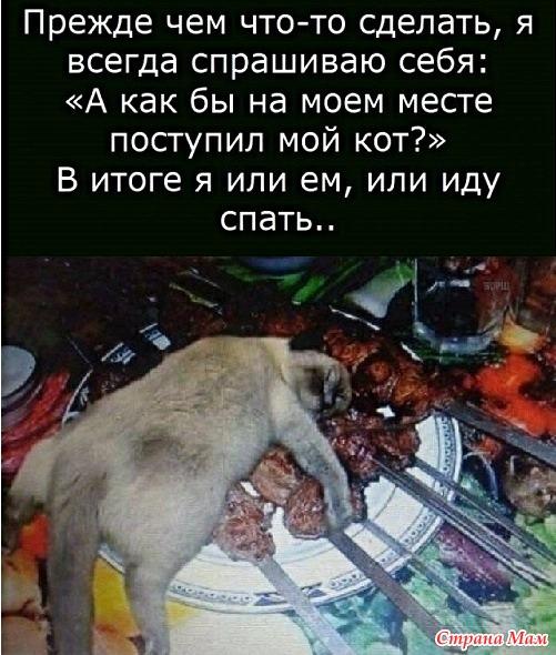 Котики 1