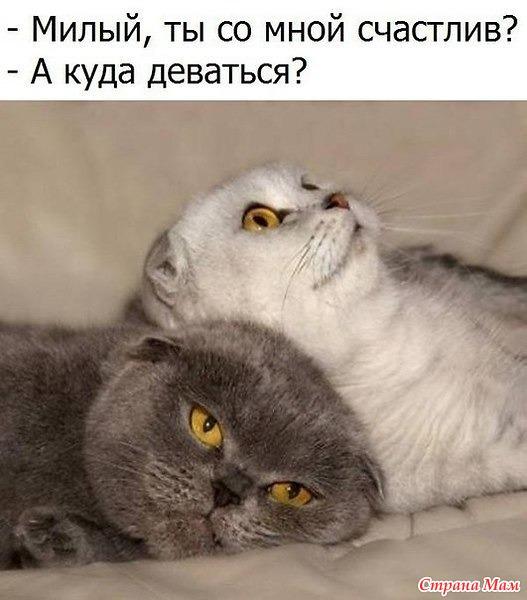 Жизнь кошачья. 2.