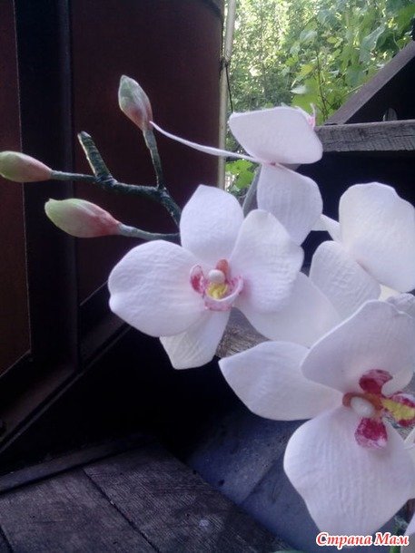 Орхидея из ФОМА