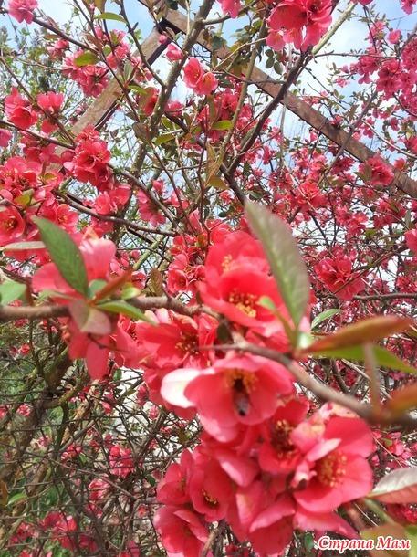 Времена года -  весна.