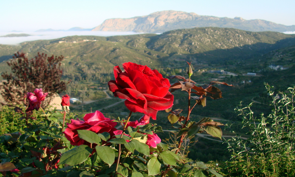 фото роза в горах папа был