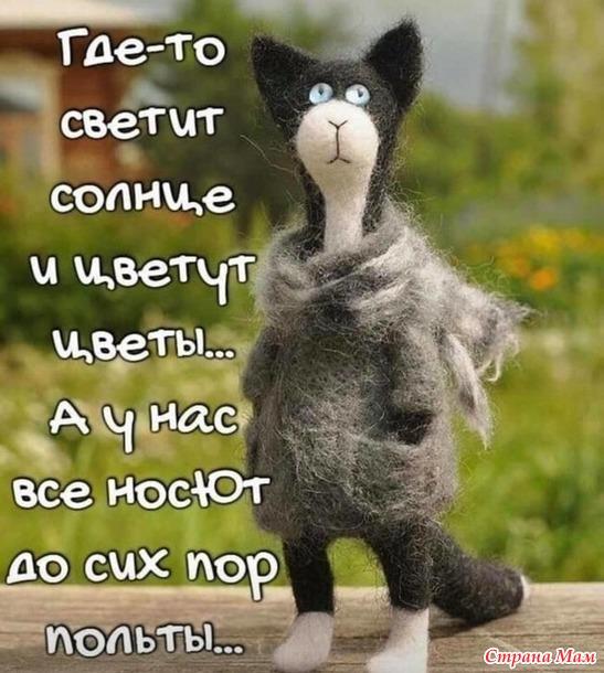 кот в  пальто:- )