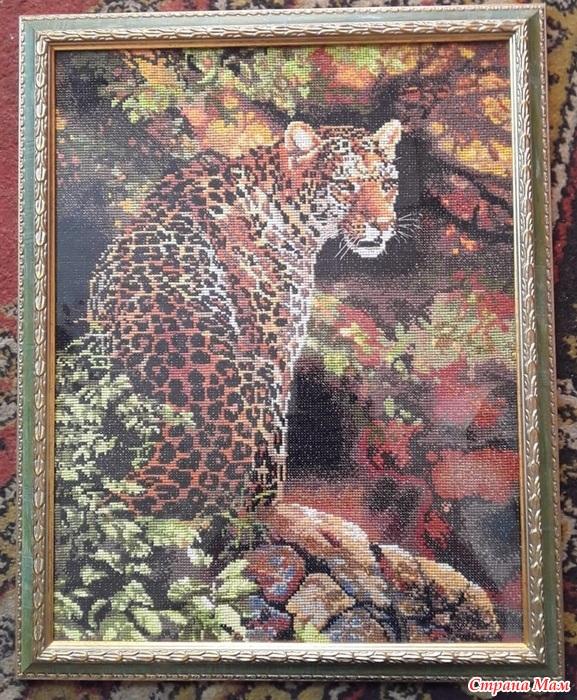 Пристальный взгляд леопарда - Вышивка и все о ней - Страна Мам  Взгляд Леопарда