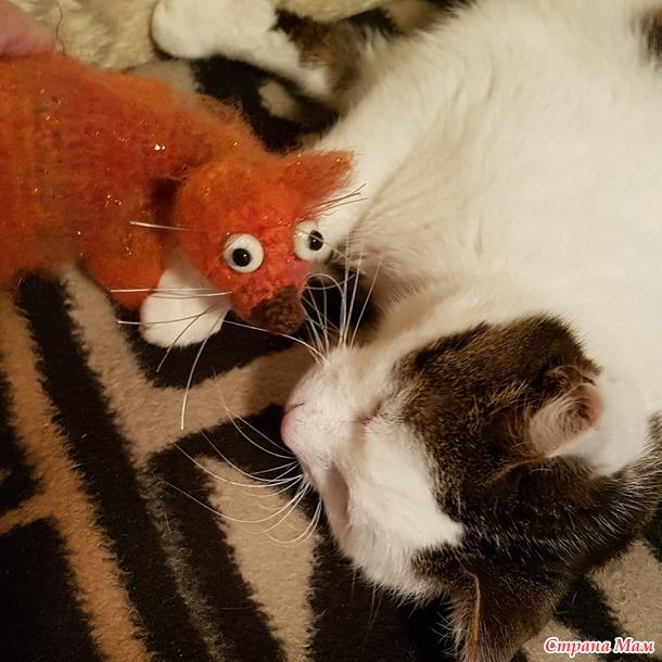 Решила завести второго кота, не знаю, подружатся ли они.