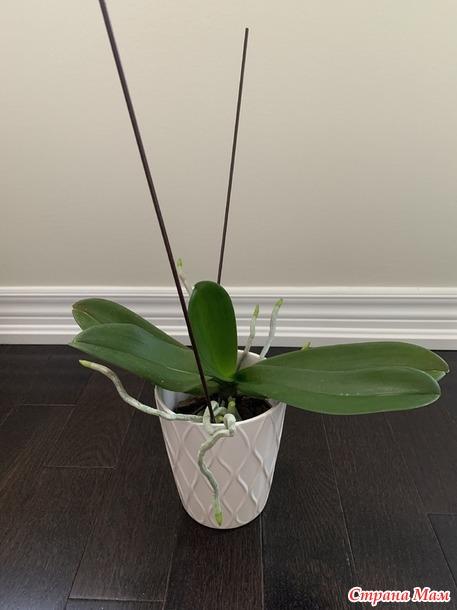 Орхидеи. Как скоро они цветут у вас повторно?