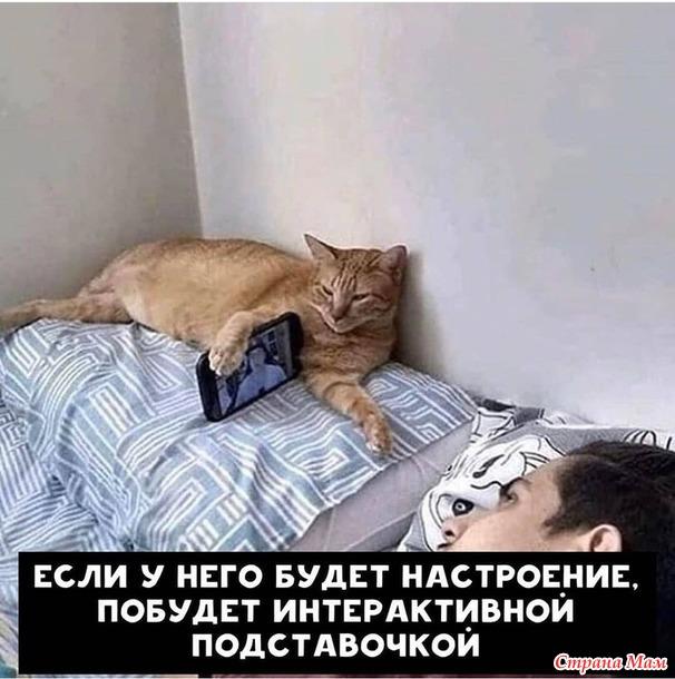 Хотите завести котейку, но сомневаетесь? Отбросьте все сомнения, ведь котейка...