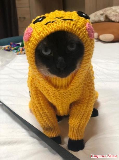 Фото модель кот Барбоскин демонстрирует комбинезон для собаки