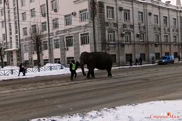 А у нас сегодня слоники по улицам гуляли и валялись в сугробах... скажите - такого не бывает?