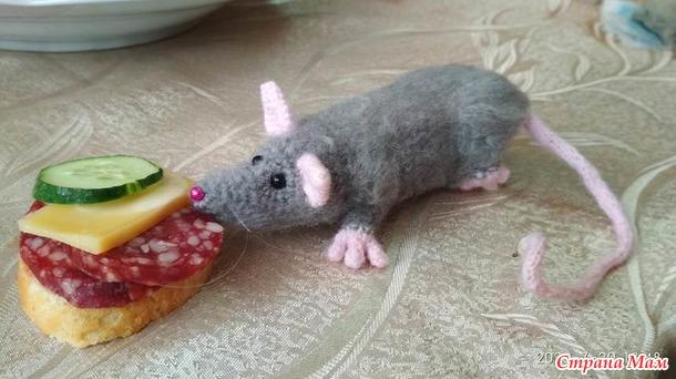 Крыска Шуня