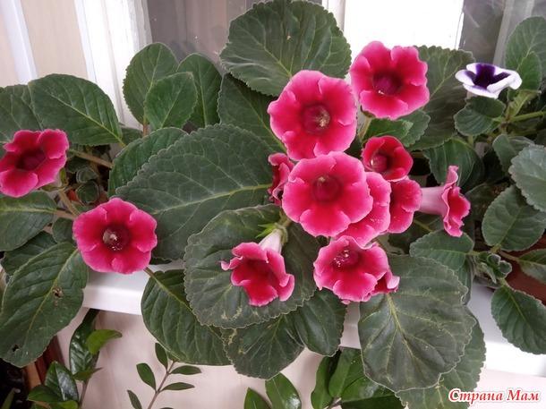 Цветы - радость души моей.