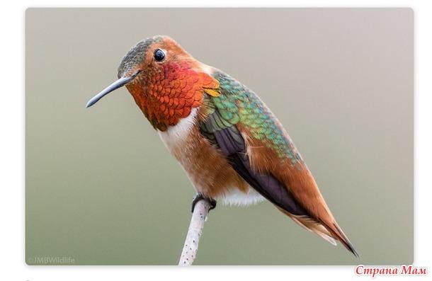 Майка радужное лето на конкурс колибри-птичка малая да удалая