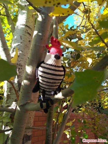 Яркая птичка (много фото)