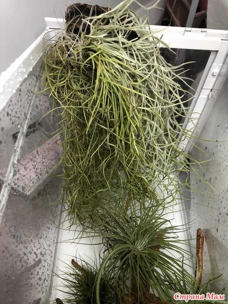 Флорариум для атмосферных тилландсий и папоротников