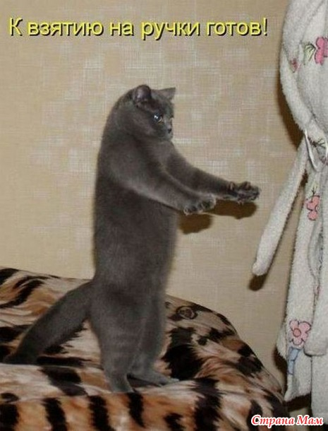 Жизнь кошачья. 25