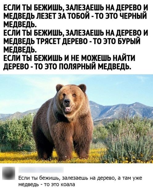 Как различать медведей)