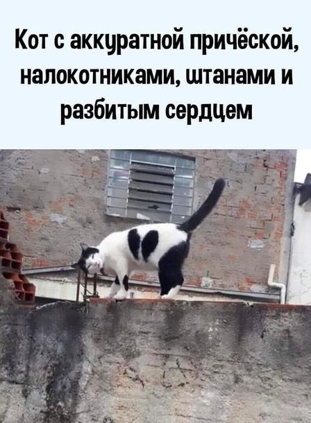 Эксклюзивный вариант)