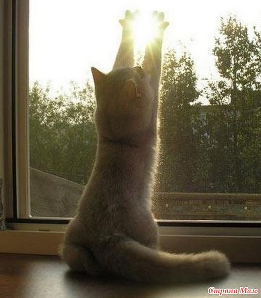 Коты как послание свыше