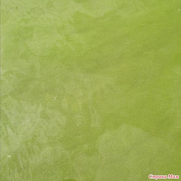Любимый пляж... затянулся  зелёными водорослями