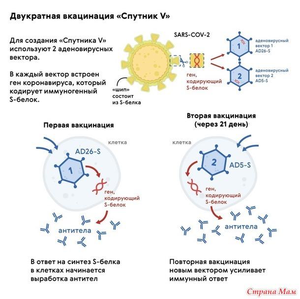 Можно ли заразиться коронавирусом от вакцины? Пора написать об этом...