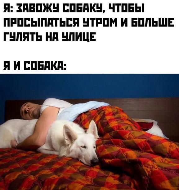 А вам для чего собака?)