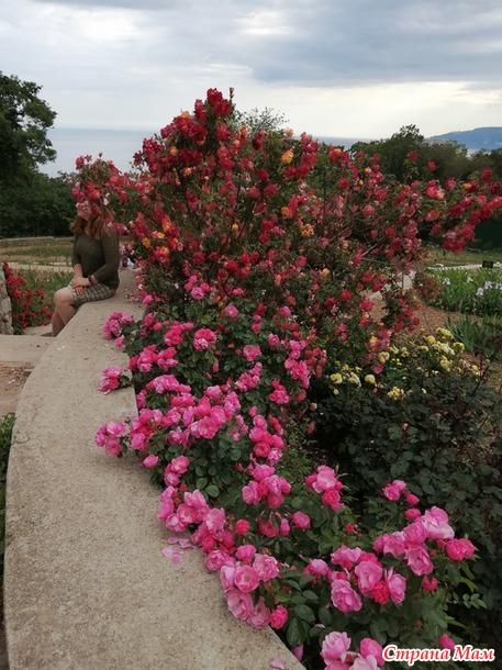 Никита и розы