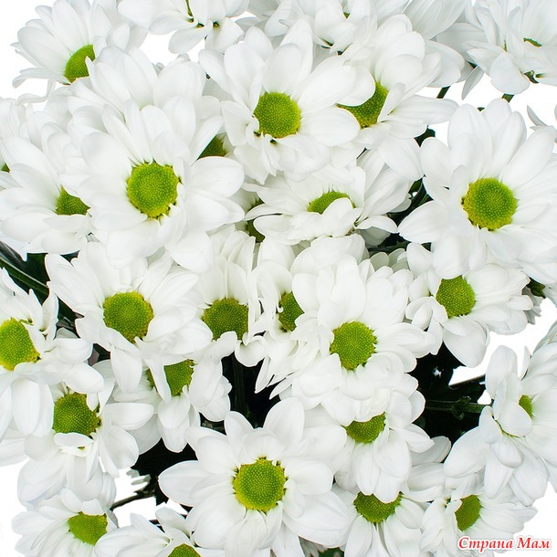 "Носки ""цветочная полянка"""