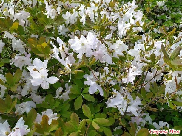 Наконец-то весна. Часть 2