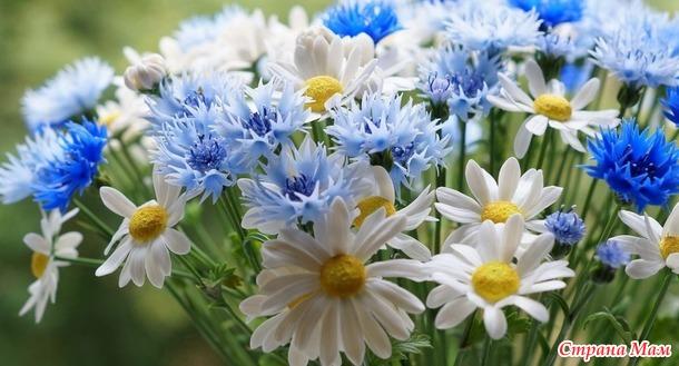 Весенние носочки-цветочки.