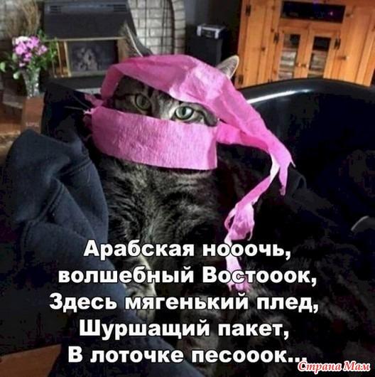 Жизнь кошачья. 29