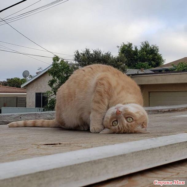 """Коты  """"сломались"""""""