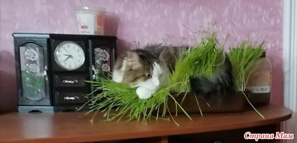 Гнездование кошек.